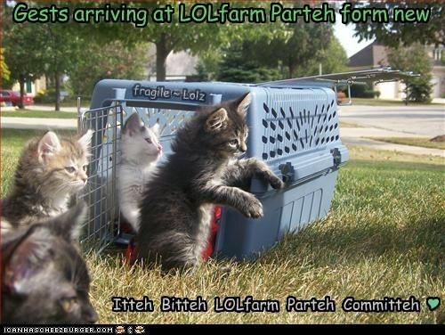 Gests arriving at LOLfarm Parteh form new Itteh Bitteh LOLfarm Parteh Committeh fragile ~ Lolz Y