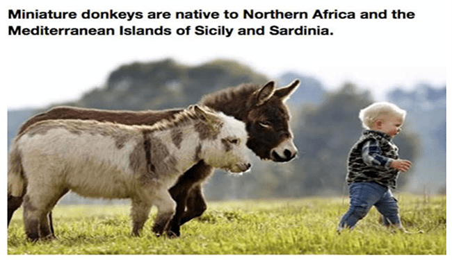 pets kids cute mini donkeys funny donkeys - 5704453