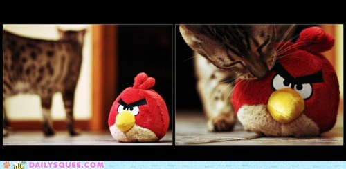 acting like animals angry birds cat friends friendship plushy stuffed animal toy