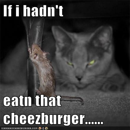 Cheezburger Image 5704847616