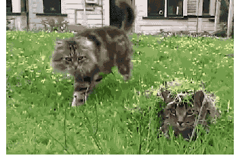 Funny GIFs gifs funny pranks pranks Cats - 5705221