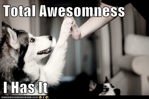 awesome,happy dog,high five,husky
