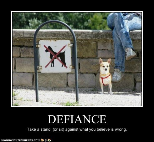 best of the week chihuahua defiance Hall of Fame no dogs allowed stand up for what you believe in