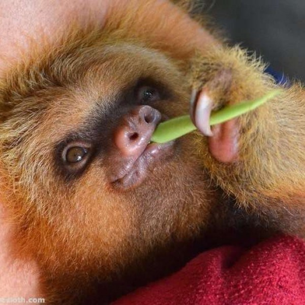 smiling sloths that will either make you feel creeped out or fall in love