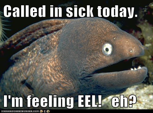 Bad Joke Eel,bad jokes,eels,ill,jokes,puns,sick,work