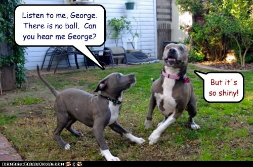 dogs funny pitbull - 5706357248