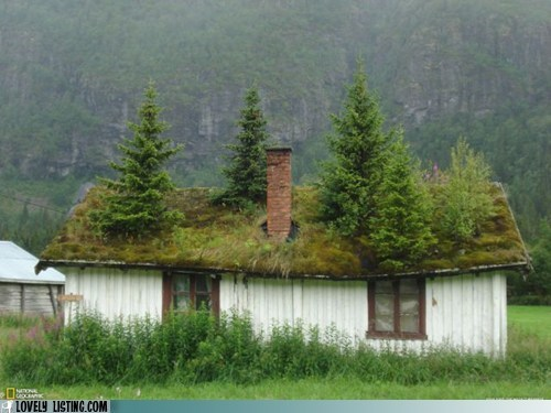 disrepair moss roof trees