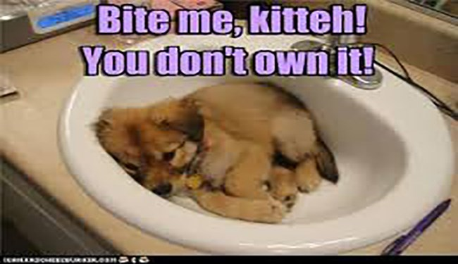 dogs cute dogs cute Memes funny dogs sinks funny - 5706501