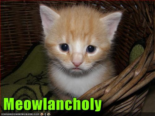 caption captioned cat expression kitten look melancholy meow prefix pun Sad - 5706696448