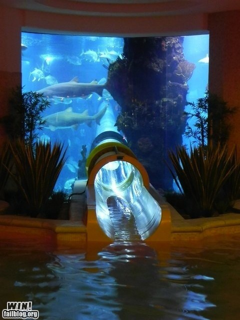 animals aquarium fish g rated hotel pool sharks slide whee win