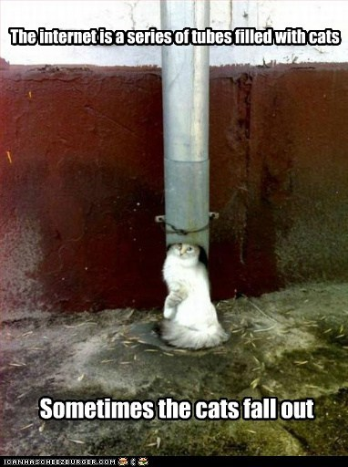 caption,captioned,cat,Cats,fall,filled,internet,oops,out,series,sometimes,tubes