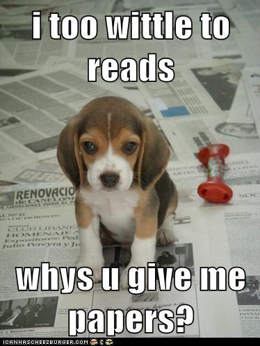 adorable,beagle,best of the week,Hall of Fame,newspaper,puppy,read,reading,young