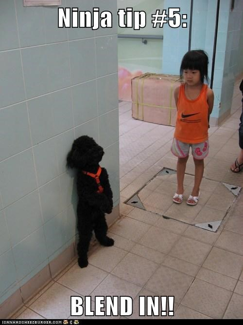 best of the week child Hall of Fame kid ninja whatbreed - 5707319296