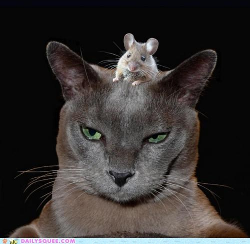 acting like animals cat control head mind mouse rodent sitting