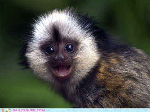 baby,big,happy,lyrics,monkey,parody,rewrite,smile,song,tamarin,wide