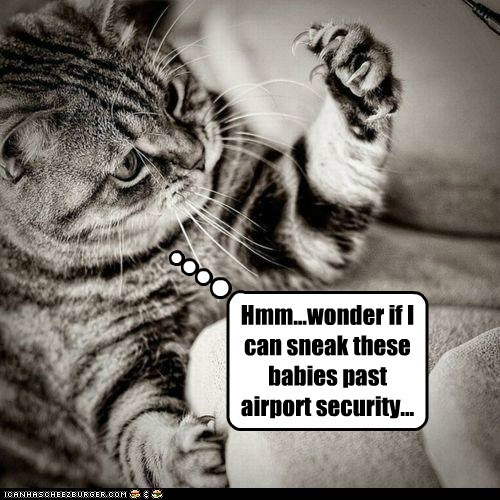 airport caption captioned cat claws past security sneak thinking thought wonder