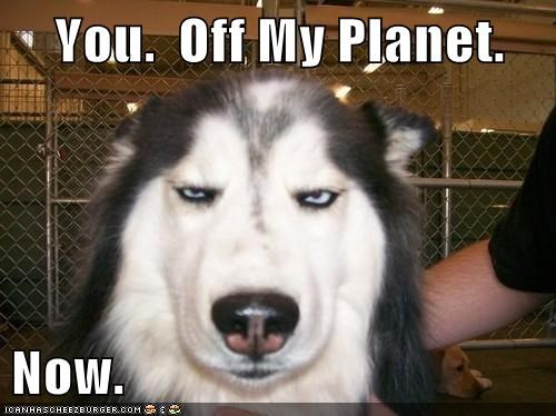 best of the week get off of my planet glare go away Hall of Fame husky stare stupid - 5708038912