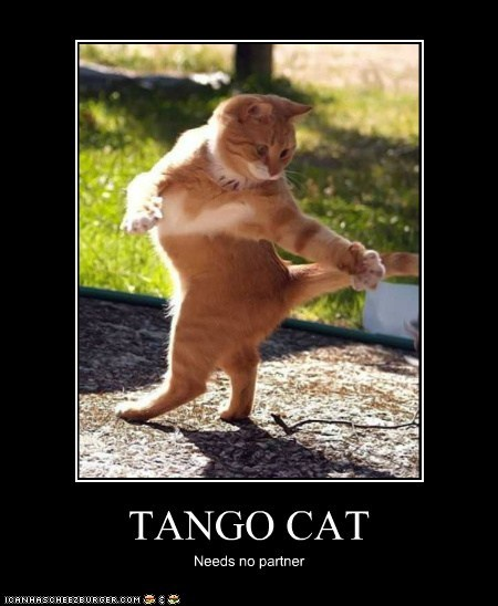 TANGO CAT Needs no partner
