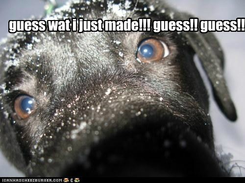 Black Lab guess what in your face labrador retriever nose outdoors snow winter