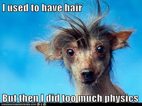 chinese crested hair mad scientist physics science whoa