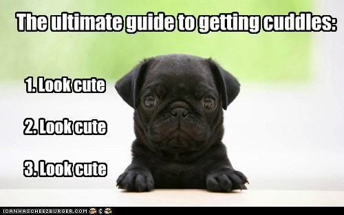 adorable best of the week cuddles cute Hall of Fame look cute pug puppy - 5708656896
