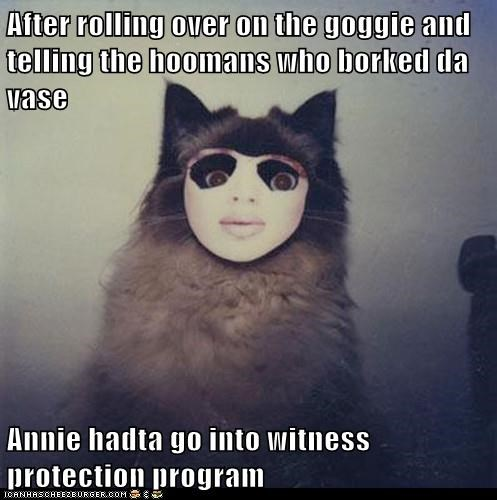 after,because reasons,caption,captioned,cat,disguise,events,himalayan,identity,mask,reasons,witness protection program