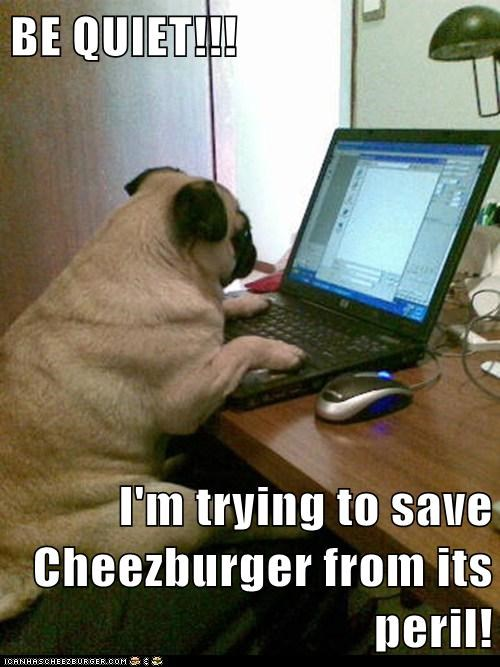 Cheezburger Image 5709844480