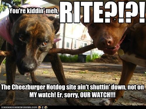 Cheezburger Image 5709872384