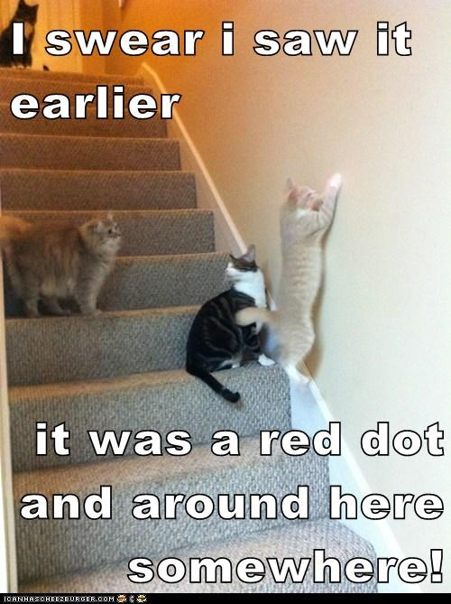 caption captioned cat Cats confused dot laser red stairs swear testimony trick wall - 5710301184