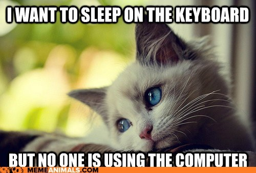 annoying best of the week caption captioned Cats computers first world first world cat problems First World Problems Hall of Fame keyboards Memes Sad - 5710425856