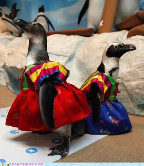 acting like animals,costume,dressed up,Hall of Fame,hanbok,lunar,new year,penguin,penguins,tradition