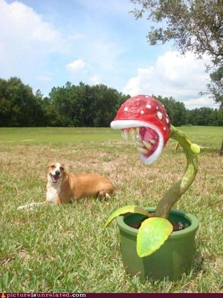 dogs IRL mario pirahna plant wtf - 5712710656