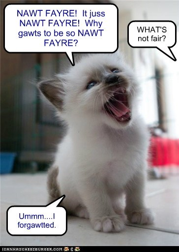 caption captioned cat confused fair forget forgetting kitten not not fair shouting tantrum - 5712723968