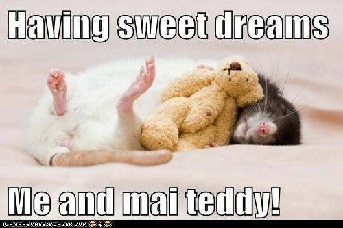 adorable animals rat sleeping teddy bear - 5713177856