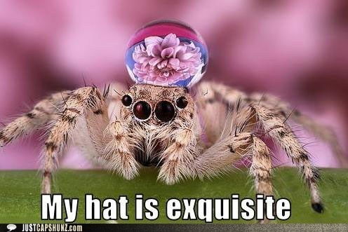 animals arachnid exquisite fabulous hat spider - 5713777664