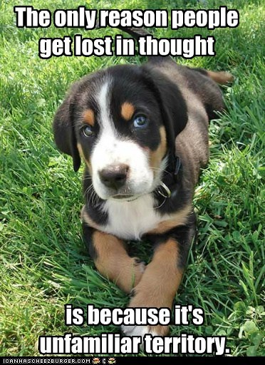 best of the week greater swiss mountain dog Hall of Fame lost in thought puppy swiss mountain dog think thinking unfamiliar - 5713885952