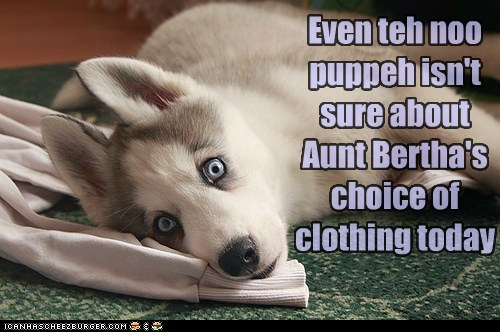 aunt bertha clothes clothing clothing choice ew husky puppy put on a shirt put on some pants shocked