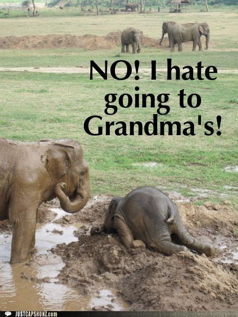 animals child elephant elephants grandmas-house i dont want to kid no pouting - 5713971968