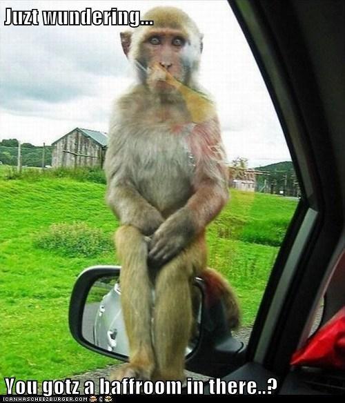 bathroom caption captioned grab grabbing holding just monkey wondering - 5714039808
