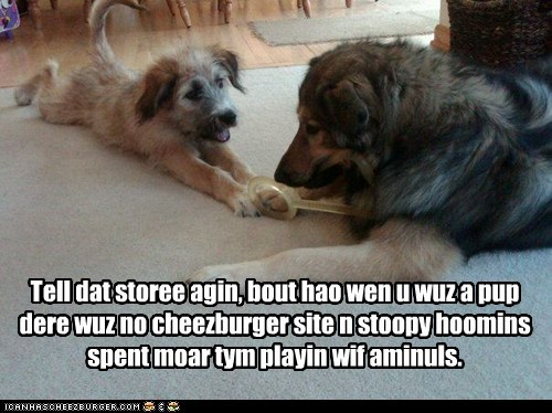 best of the week Hall of Fame mixed breed pre-cheezburger story Story Time