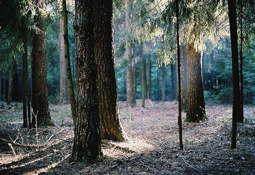Forest,getaways,tree,trees,unknown location,wilderness