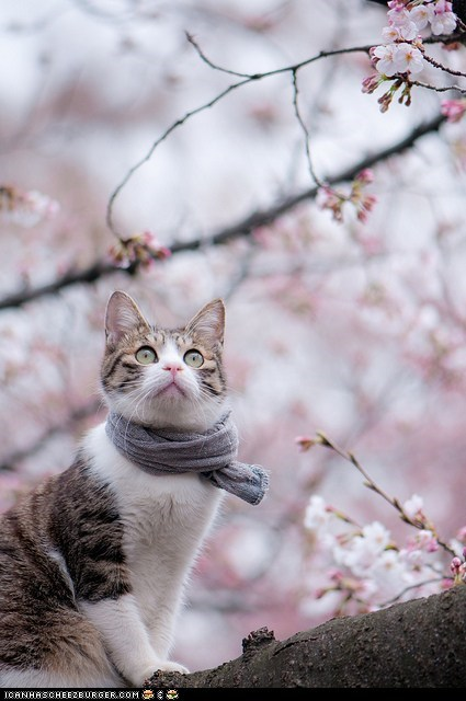 cyoot kitteh of teh day,fashion,model,modeling,nature,scarf,trees