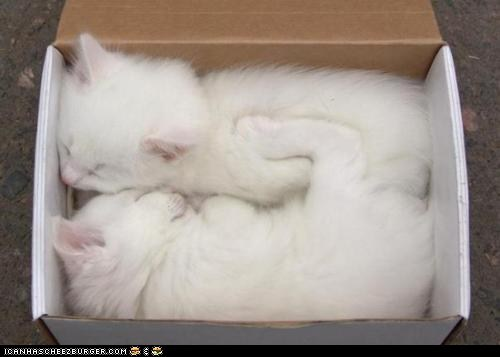 boxes,cardboard box,cyoot kitteh of teh day,sleeping,tight squeeze,two cats,white