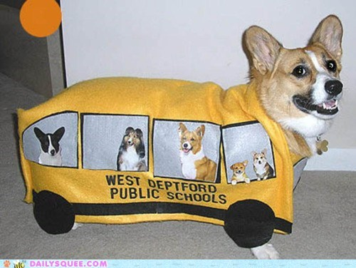 acting like animals,bus,corgi,costume,dressed up,Hall of Fame,magic school bus,school