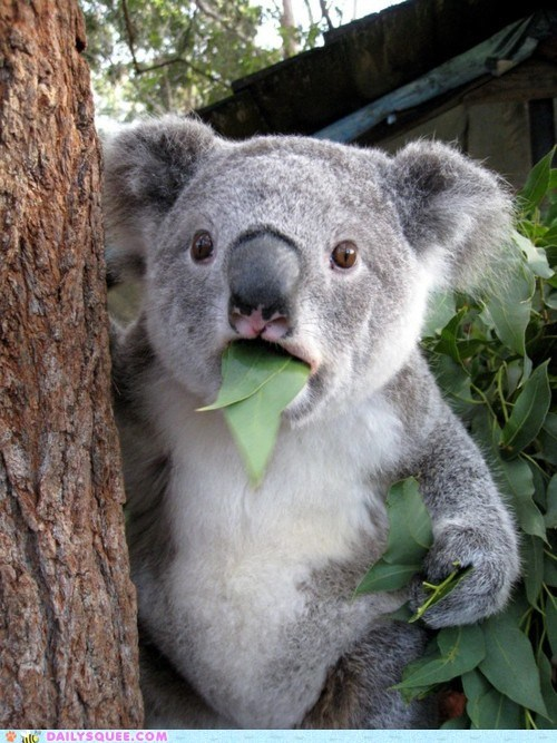acting like animals aghast awe dodo Hall of Fame hallucinating interrupted koala mid-nom stopped - 5716778752