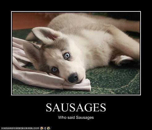 Cheezburger Image 5716826112