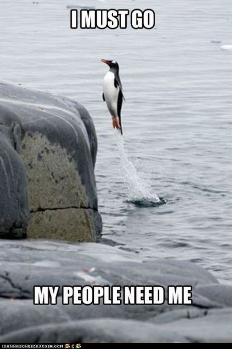 best of the week,holidays,i must go,my people need me,penguin,penguin awareness day,penguins