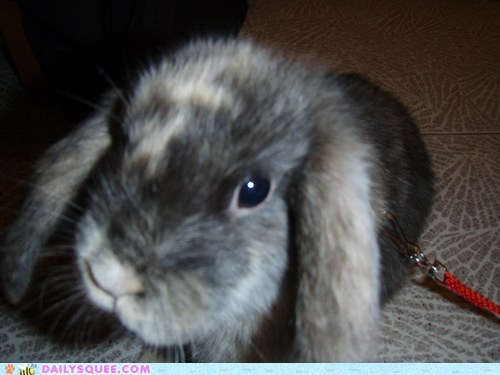 bunny,camera,curious,do want,happy bunday,like,rabbit,reader squees