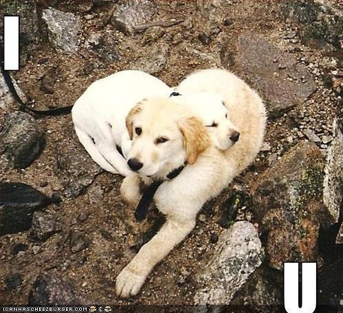 beach labrador love - 571847936