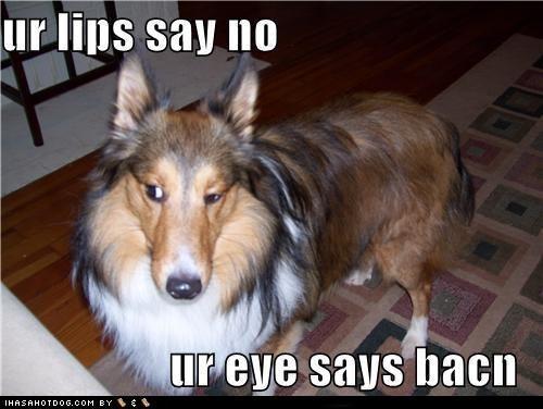 goggie ob teh week,poll,poodle,rottweiler,sheltie,shetland sheep dog,weimaraner